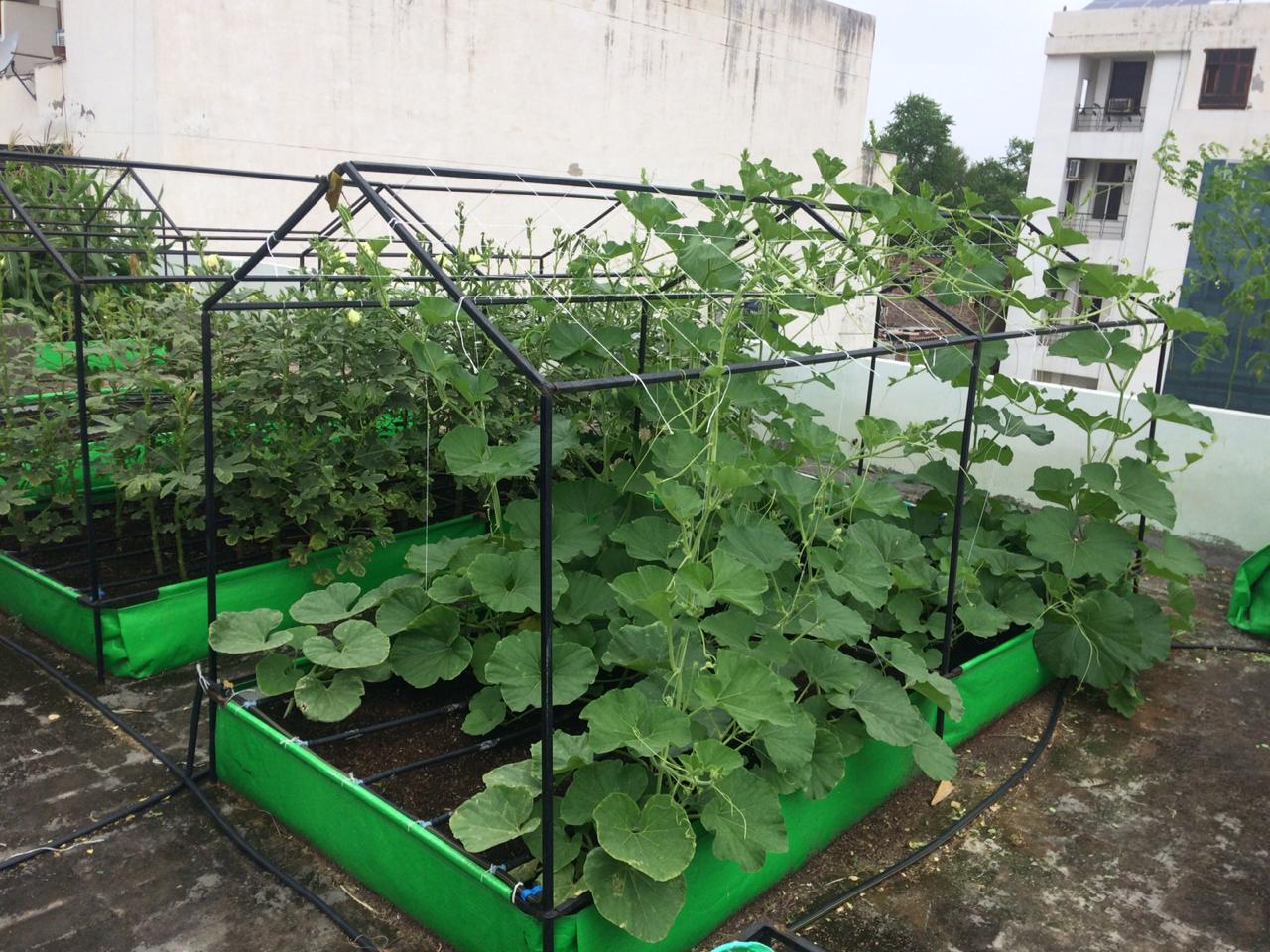 This Startup Has Helped Over 400 Homes Grow Food on Their Terrace!